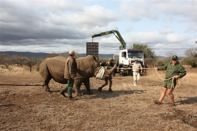 Rhino Capture 4