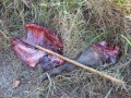 Illegally Hunted Warthog Remains