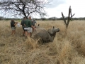 Rhino Capture - Darted by Poachers