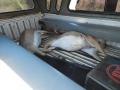 Illeagaly HUnted Impalas